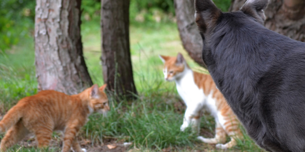 Workshop EHBO voor katten