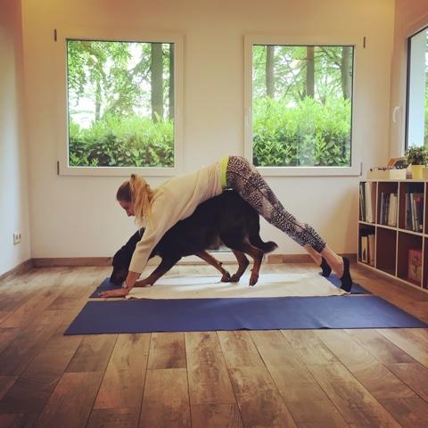 Workshop Yoga samen met je hond