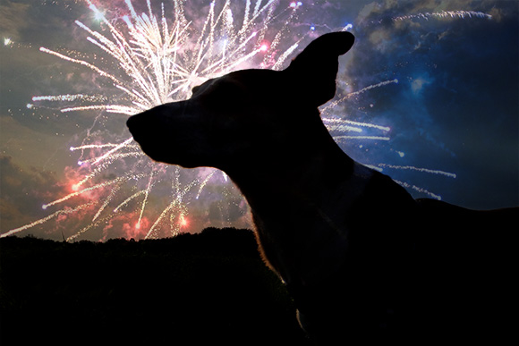 Lezing: Knal-angst bij honden 23 november